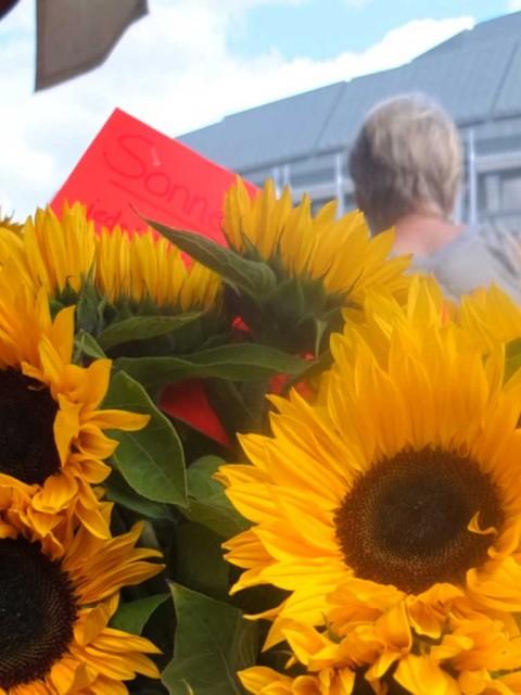 Wochenmarkt Aschaffenburg Sonnenblumen